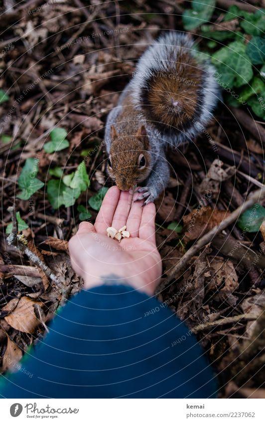 Fingerfood. Nuss Freizeit & Hobby Abenteuer Mensch Hand Handfläche 1 Natur Tier Blatt Park Wildtier Tiergesicht Fell Eichhörnchen Schwanz berühren festhalten