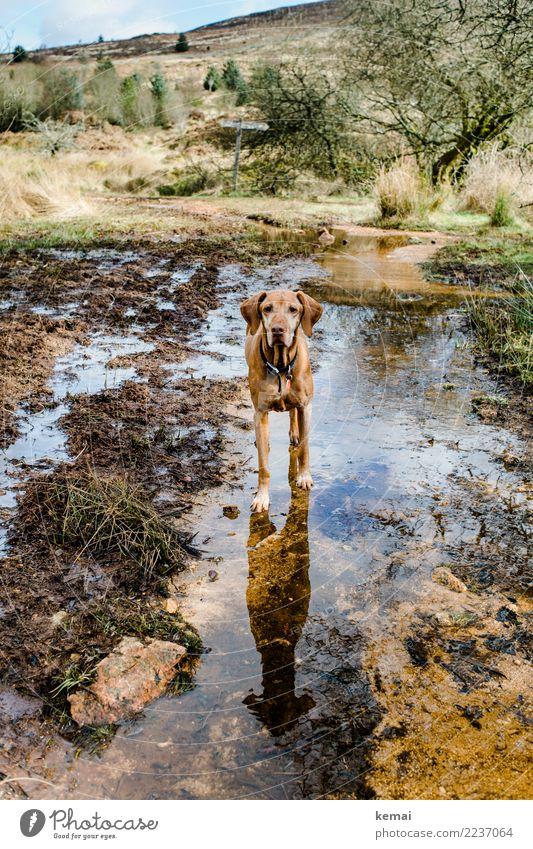 Erwartungsvoll. Natur Ferien & Urlaub & Reisen Hund Wasser Landschaft Tier Umwelt Freiheit Freundschaft Ausflug Freizeit & Hobby wandern stehen authentisch