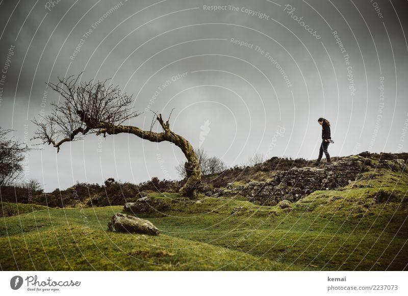 Ein Baum und ein Mensch Himmel Natur Ferien & Urlaub & Reisen grün Landschaft Erholung Wolken dunkel Erwachsene Leben Lifestyle Umwelt feminin Gras
