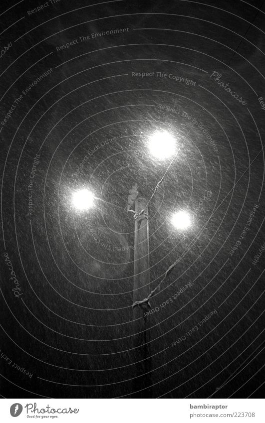 City Lights Lampe Winter Wetter schlechtes Wetter Regen Schnee Schneefall frieren kalt nass Straßenbeleuchtung Mast Licht Schwarzweißfoto Außenaufnahme