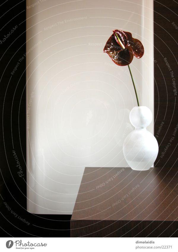 blume auf tisch Blume Holz Tisch Vase