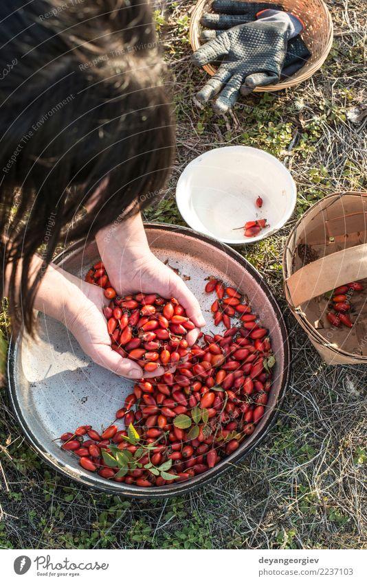 Hagebutte in einem Korb Frucht Tee Natur Pflanze Blatt Hund natürlich wild rot weiß Roséwein Hagebutten Hüfte Erdöl Medizin Beeren Vitamin Hintergrund