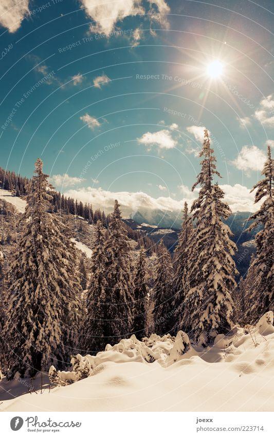Tauwetter Himmel weiß Baum blau Sonne Winter Wolken ruhig Wald kalt Schnee Berge u. Gebirge Aussicht Klimawandel Blauer Himmel Licht