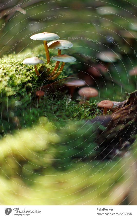 #AS# ohne Moos.. Kunst Kunstwerk ästhetisch Pilz Waldboden Außenaufnahme Makroaufnahme Herbst Waldlichtung Waldrand Waldwiese Farbfoto Gedeckte Farben