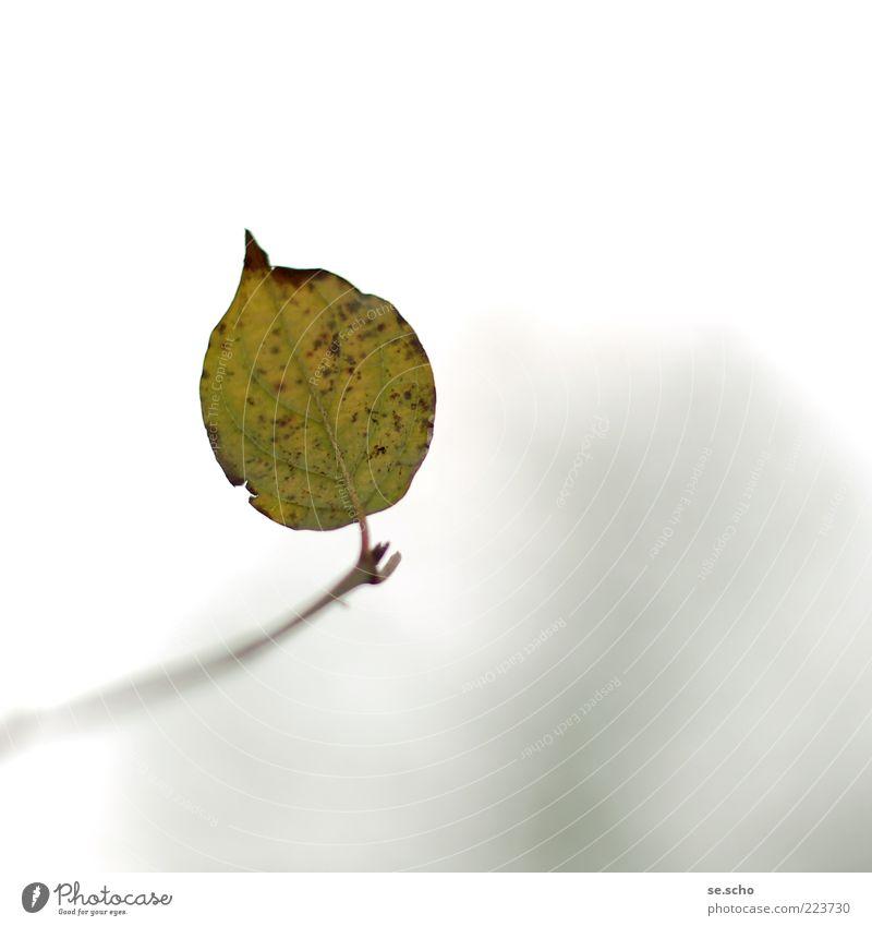 Nr. 50 zum 3. Natur grün schön Pflanze Blatt ruhig Einsamkeit Herbst Umwelt Zweig letzte Blattadern Grünpflanze Herbstlaub scheckig dehydrieren