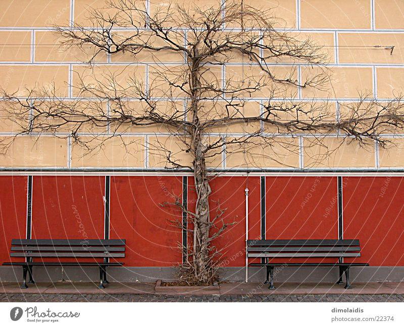baumkreuz Baum Wand Symmetrie Winter Aschaffenburg Bank Ast pompejanum