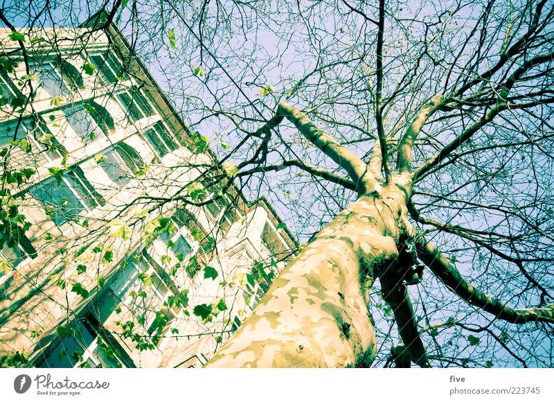 Hamburg Tree Trunk Umwelt Natur Himmel Wolkenloser Himmel Sonne Winter Schönes Wetter Pflanze Baum Grünpflanze Stadt Fußgängerzone Haus Bauwerk Gebäude