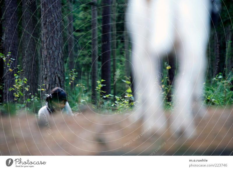 big brother Mensch Natur Hund grün Baum Tier Wald Herbst Landschaft Beine Freundschaft stehen Sträucher Spaziergang beobachten Baumstamm