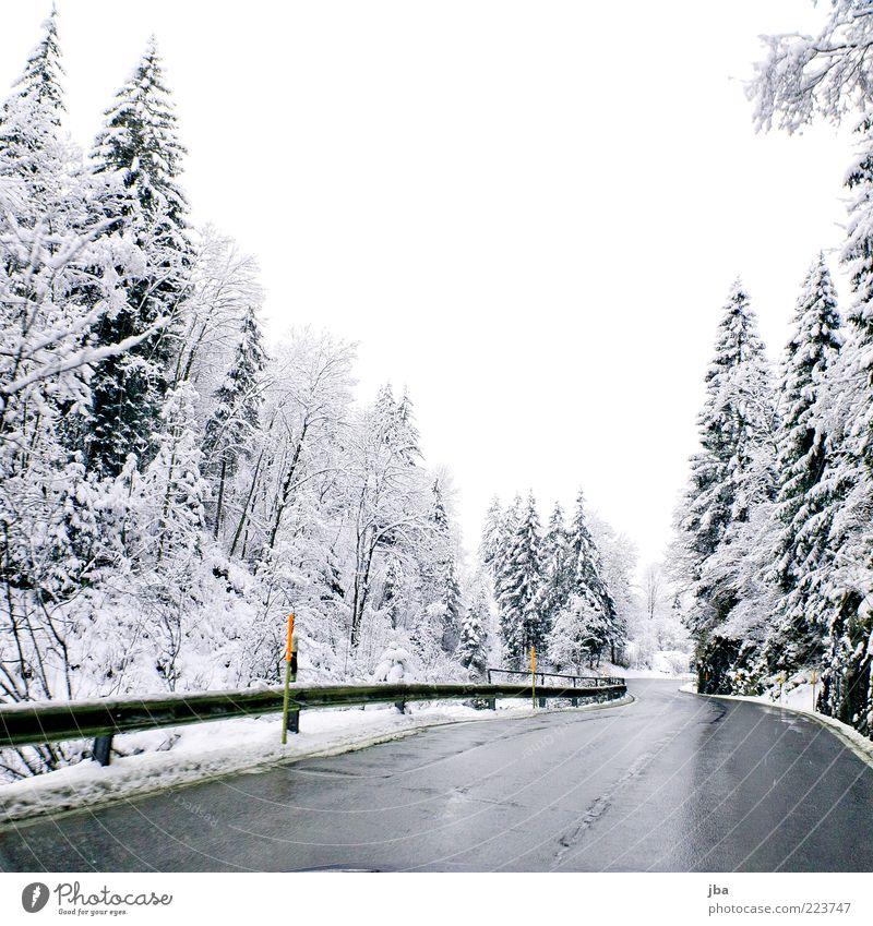 Winterstrasse weiß Wald Straße Schnee Freiheit nass Nebel Asphalt Schweiz Tanne Verkehrswege Kurve Autofahren Bach Glätte