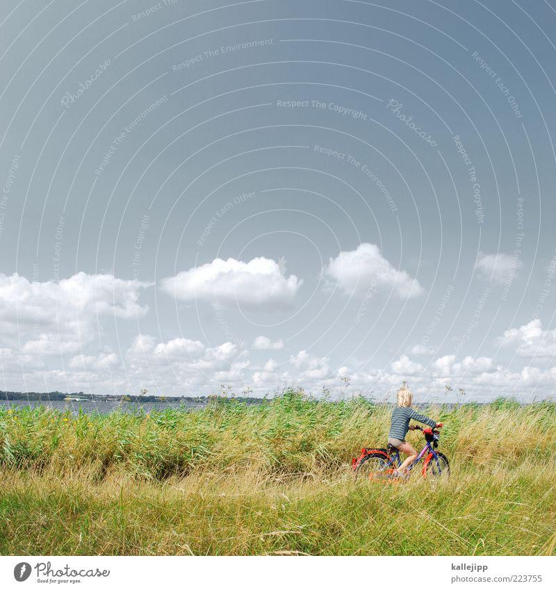 küste Mensch Junge Leben 1 Luft Wasser Sommer Klima Wetter Schönes Wetter Küste Bucht Fjord See Fahrrad Spielen nachhaltig Freizeit & Hobby Leichtigkeit Umwelt
