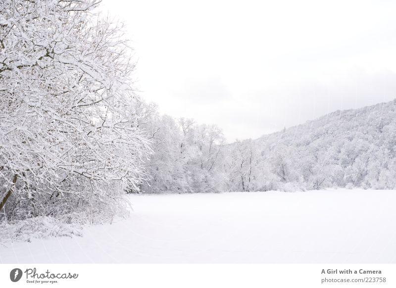 simply white Natur weiß Baum schön Winter ruhig Ferne Wald kalt Schnee Landschaft Umwelt Wetter Eis Feld wild