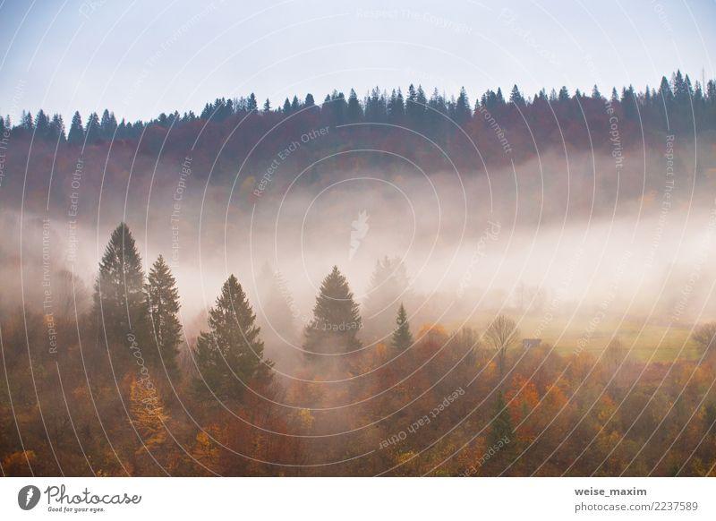 Nebelwolken am regnerischen Tag in den Bergen. bunter Wald Natur Ferien & Urlaub & Reisen Pflanze Landschaft Baum rot Blatt Wolken Ferne Berge u. Gebirge gelb