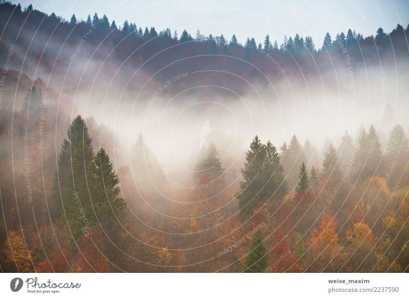 Regen im bunten Herbstwald. Nebelwolken am regnerischen Tag Himmel Natur Ferien & Urlaub & Reisen Pflanze Landschaft Baum rot Blatt Wolken Ferne Wald