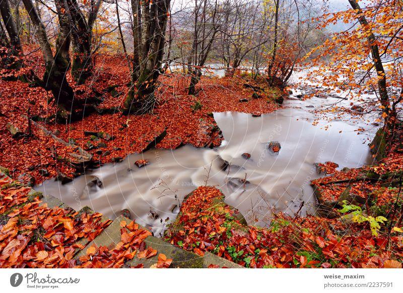 Autumn Creek im Weißbuchen- und Buchenwald. Herbstfarben Natur Ferien & Urlaub & Reisen Pflanze grün Wasser Landschaft Baum rot Erholung Blatt Wald