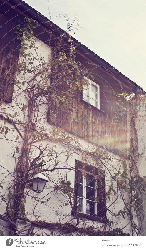 5oo Dorf Haus Einfamilienhaus Mauer Wand Fassade Fenster alt einzigartig Ranke Pflanze Farbfoto Außenaufnahme Dämmerung Sonnenlicht Sonnenstrahlen