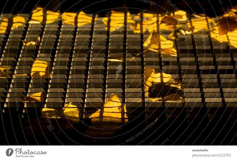 Lichtschacht Blatt Metall fallen leuchten liegen verblüht dehydrieren trocken gelb schwarz Gefühle Sicherheit Schutz Geborgenheit Warmherzigkeit Ende Klima