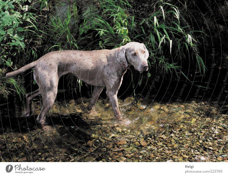 Erfrischung bei 37 Grad... Natur Wasser grün Pflanze Sommer Blatt Tier Leben Gras Umwelt Hund braun nass ästhetisch Schwimmen & Baden stehen