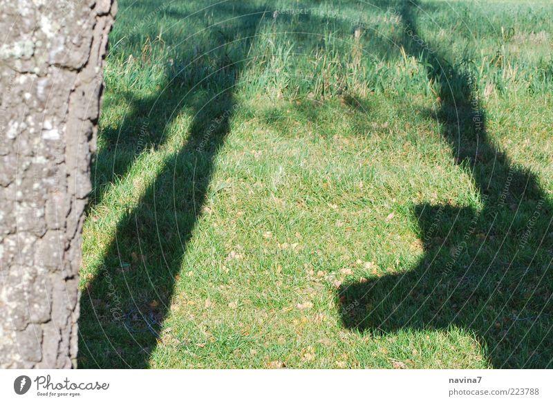 Schattenleben Baum Stimmung Farbfoto Außenaufnahme Morgendämmerung Abend Dämmerung Baumstamm Strukturen & Formen Menschenleer Schattenspiel Wiese Gras