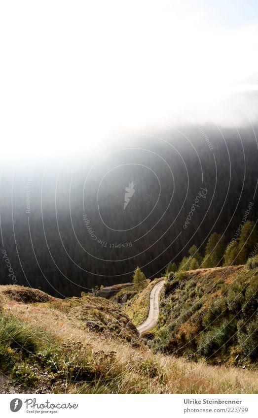 Ins Tal hinab Natur Baum Pflanze ruhig Straße Herbst Berge u. Gebirge Landschaft Gras Nebel Felsen Sträucher Alpen Verkehrswege Schlucht Schönes Wetter