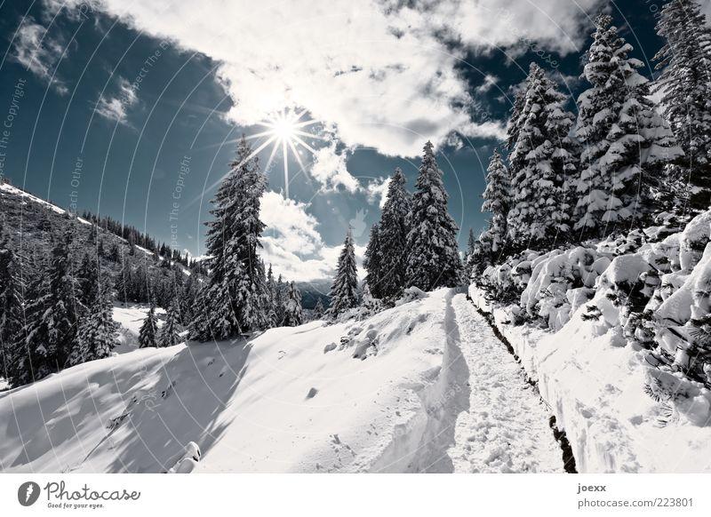 Panoramaweg Natur Landschaft Himmel Wolken Sonne Winter Schönes Wetter Schnee Baum Wald Alpen Berge u. Gebirge Wege & Pfade blau schwarz weiß Predigtstuhl