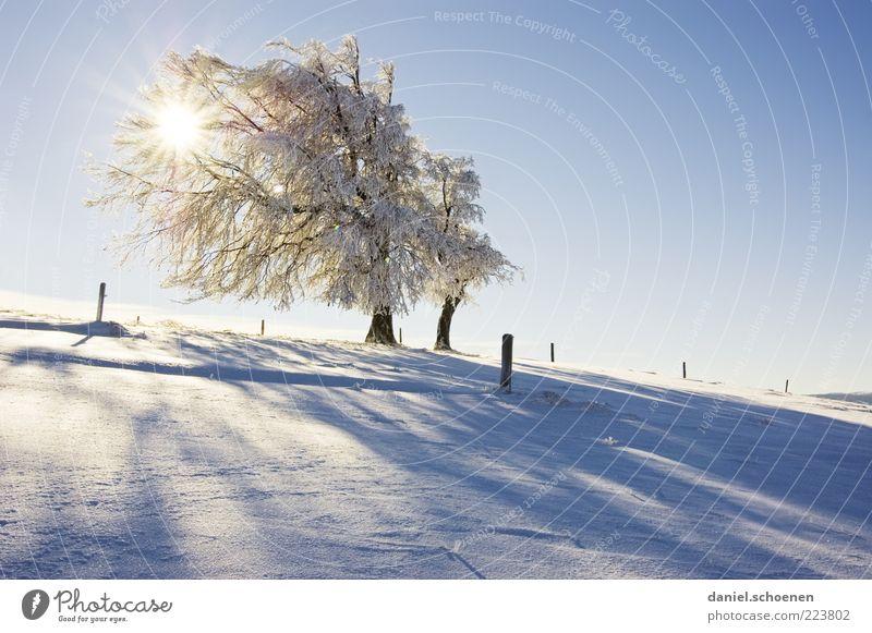 Schauinslandgegenlichtwetterbuche Natur weiß Baum blau Sonne Ferien & Urlaub & Reisen Winter Schnee Berge u. Gebirge Landschaft Umwelt hell Eis Frost Schönes Wetter Winterurlaub