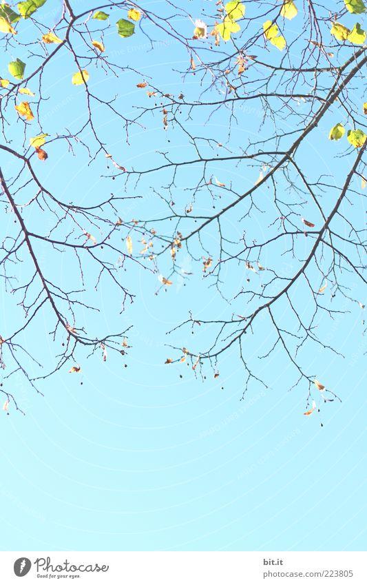 Annäherung Umwelt Natur Pflanze Himmel Wolkenloser Himmel Frühling Sommer Schönes Wetter Dürre Baum blau Stimmung Frühlingsgefühle Vorfreude Blatt Ast Zweig