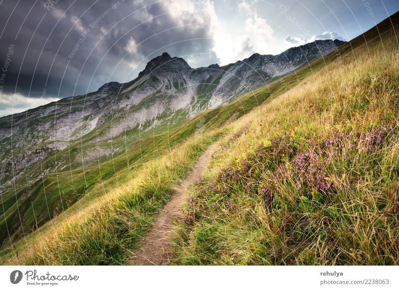 Heidekraut blüht durch Trekkingspfad in den Bergen Ferien & Urlaub & Reisen Berge u. Gebirge wandern Natur Landschaft Himmel Wolken Unwetter Blume Blüte Alpen