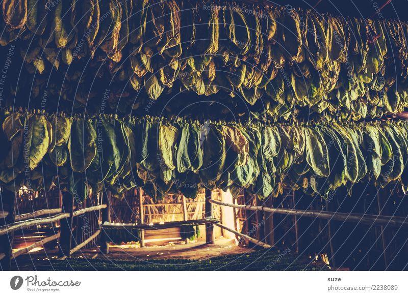 Tabakladen Handarbeit Kultur Wärme Pflanze Blatt Hütte hängen Armut authentisch dunkel einzigartig natürlich braun grün Tradition Vergangenheit Zeit Tabakwaren