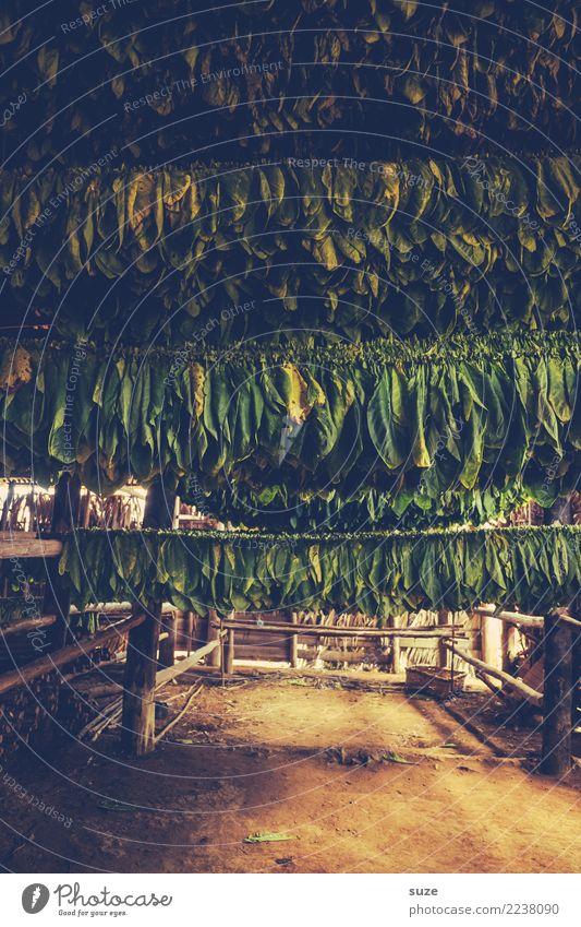 Rohlinge Handarbeit Kultur Pflanze Wärme Blatt Hütte hängen Armut authentisch dunkel einzigartig natürlich braun grün Tradition Vergangenheit Zeit Tabak