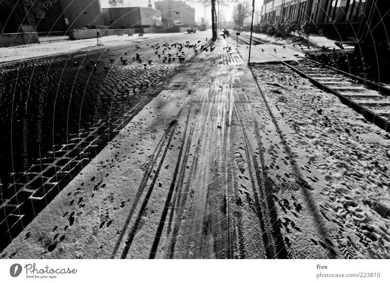 Hamburg Snow Track Umwelt Himmel Winter Wetter Schnee Stadt Stadtrand Straße Wege & Pfade Tier Vogel Taube Schwarm hell Eis Fußspur Kopfsteinpflaster