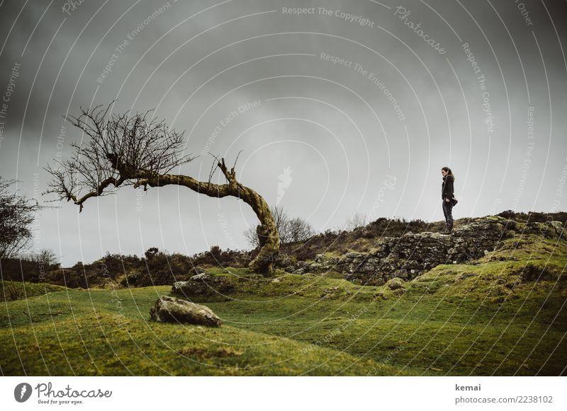 Frau steht auf einer Mauer vor einem Baum im Dartmoor, England Lifestyle Erholung ruhig Freizeit & Hobby Ferien & Urlaub & Reisen Ausflug Abenteuer Freiheit