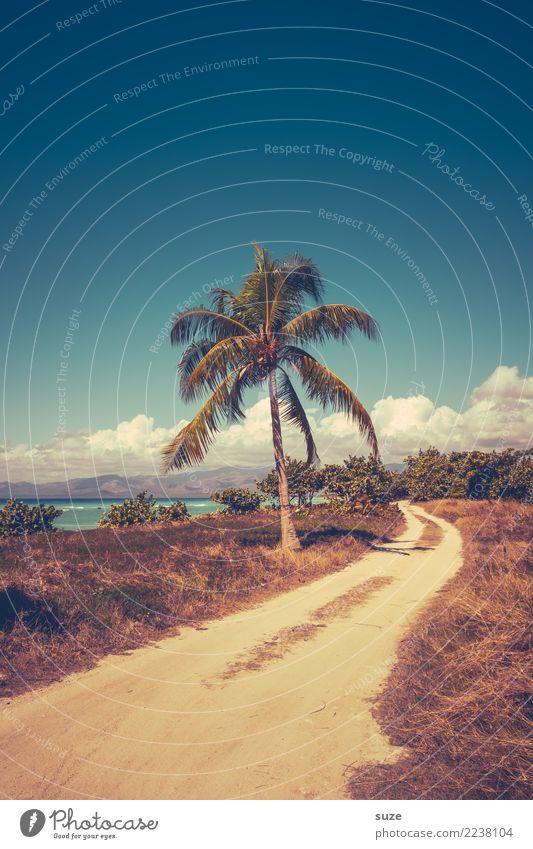 Einwegpalme Himmel Ferien & Urlaub & Reisen Sommer Landschaft Meer ruhig Wärme Wege & Pfade Küste Gras Zeit Tourismus Zufriedenheit Romantik Fußweg Sommerurlaub