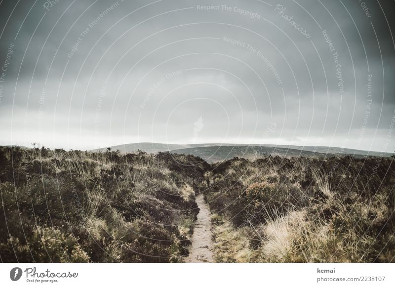 Wege ins Moor Himmel Natur Ferien & Urlaub & Reisen Pflanze Landschaft Erholung Einsamkeit Wolken ruhig Ferne dunkel Umwelt Wege & Pfade Gras Tourismus Freiheit