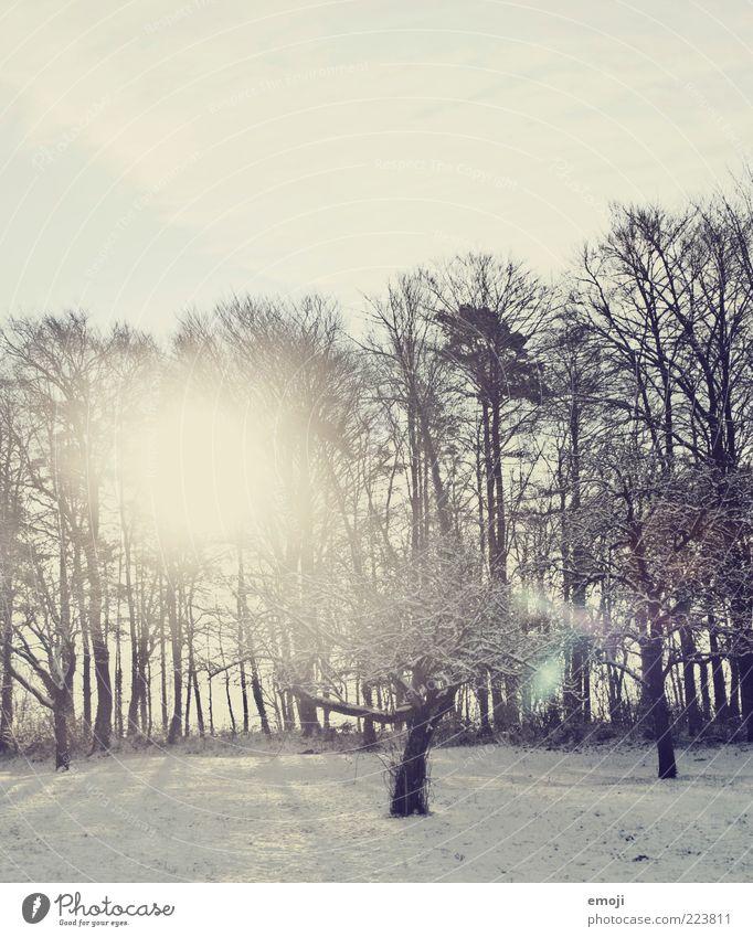 Serotonin Umwelt Natur Himmel Winter Wetter Schönes Wetter Schnee Baum Feld Wald kalt blau Blendenfleck Farbfoto Außenaufnahme Textfreiraum oben Morgen Licht