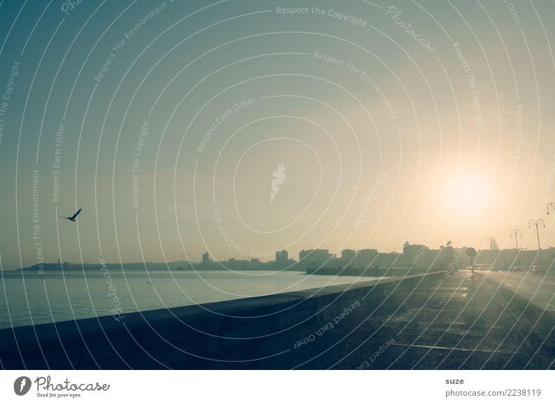 Tagesanbruch Ferien & Urlaub & Reisen Wasser Meer Straße Wege & Pfade Küste Freiheit Vogel Beginn Bürgersteig Skyline Städtereise Flair Kuba Promenade Havanna