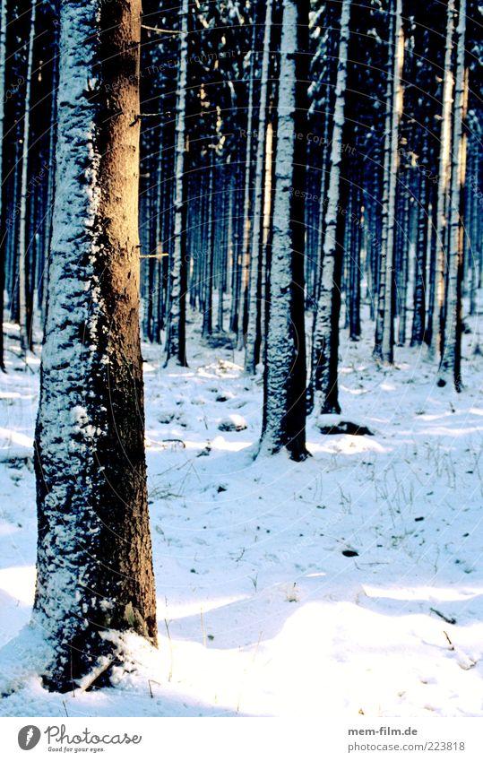 licht im wald Winter Wald Schnee viele Baumstamm