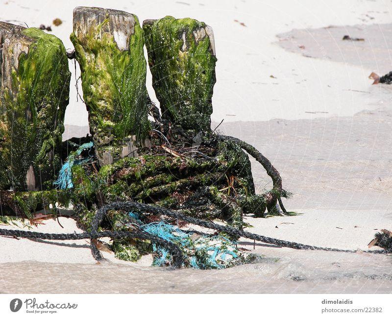 tag am meer Meer Schnur Strand Fischer Wasserfahrzeug Holz Baumstamm Seil Sand Ast