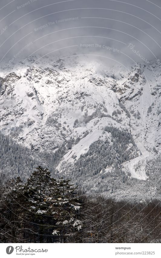 Blick aus meinem Küchenfenster Natur weiß Baum Schnee Berge u. Gebirge Landschaft grau Umwelt braun Nebel Felsen Hügel Alpen Berghang gewaltig