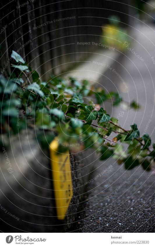 Wuchern Natur grün Pflanze Blatt Straße Wand Herbst Landschaft Garten Umwelt Wege & Pfade Mauer Park Schilder & Markierungen Wachstum Sträucher