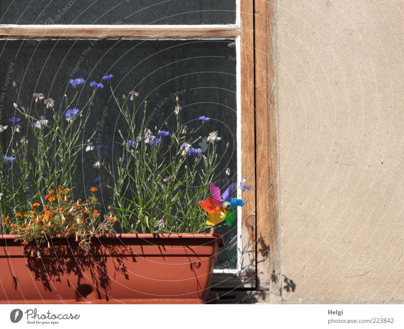 Sommer in der Stadt... Natur grün blau Pflanze Sommer Blume Blatt Haus Wand Fenster Blüte Holz Stein Mauer Gebäude braun