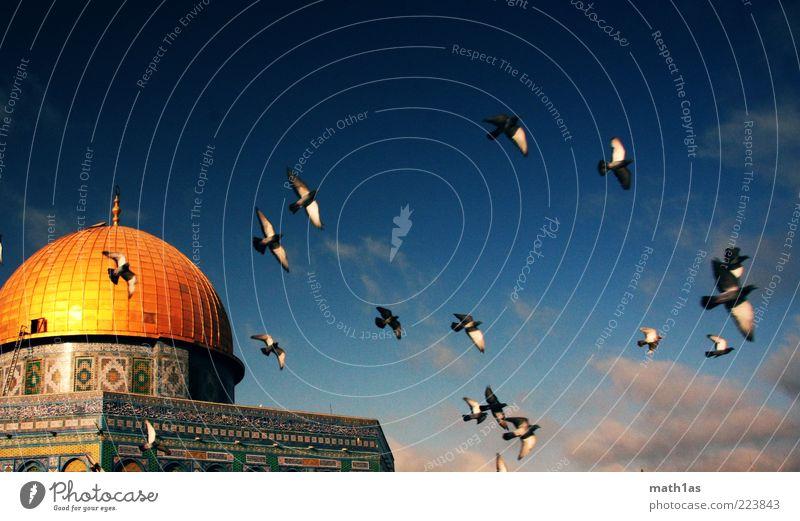Felsendom Wolken Architektur Freiheit fliegen Vogel gold frei Israel Gold Sehenswürdigkeit Naher und Mittlerer Osten Dom Schwarm Blauer Himmel Frühlingsgefühle