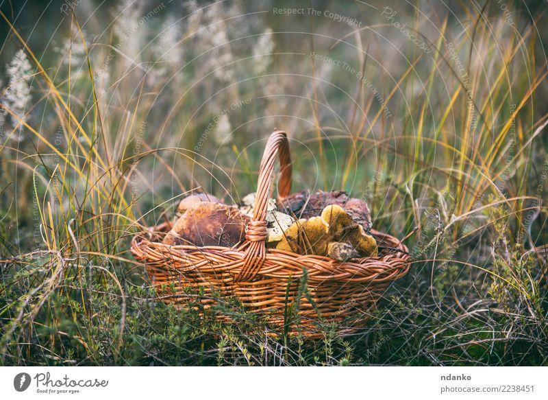 essbare wilde Pilze Vegetarische Ernährung Natur Landschaft Herbst Gras Blatt Wald frisch natürlich braun grün weiß Korb Hintergrund Lebensmittel Jahreszeiten