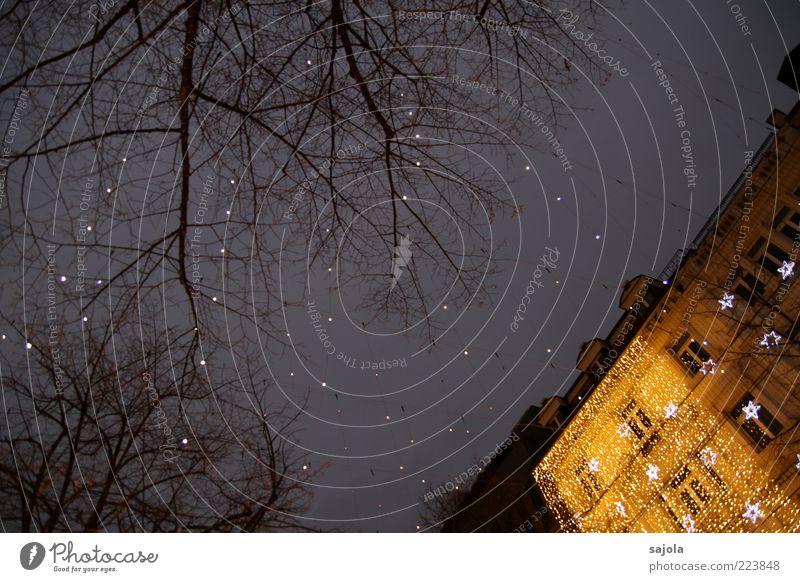 lucy in the sky Himmel Baum Haus Fassade Stern (Symbol) leuchten Dekoration & Verzierung Glühbirne Weihnachten & Advent Zürich Schweiz Sternenhimmel