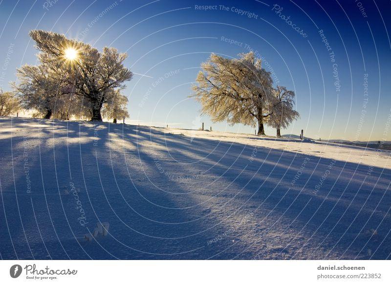Usertreffen am Schauinsland ??!! Natur weiß Baum blau Sonne Winter kalt Schnee Berge u. Gebirge Landschaft Umwelt hell Eis Wind Klima Frost