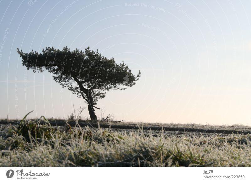 Mein Freund, der Baum harmonisch ruhig Freiheit Winter Natur Landschaft Erde Luft Himmel Horizont Sonnenlicht Schönes Wetter Eis Frost Pflanze Gras Sträucher