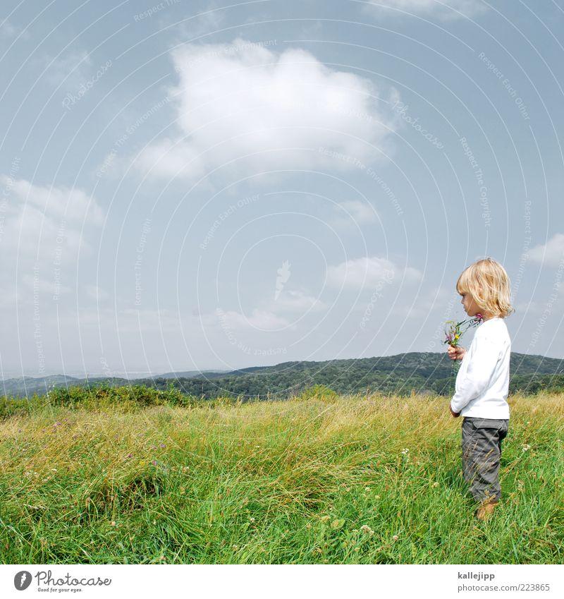 naturkunde Mensch Kind Himmel Natur Pflanze Sonne Sommer Blume Wolken Ferne Wald Wiese Leben Spielen Umwelt Landschaft