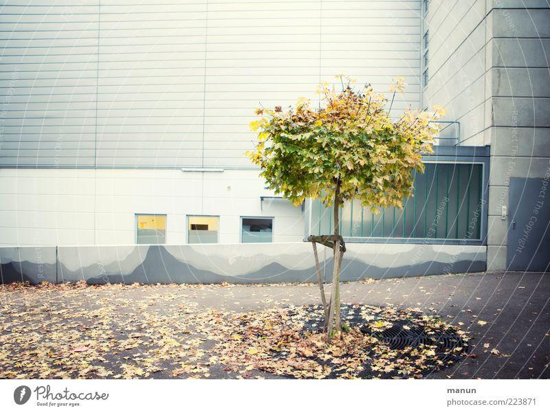 grüne Lunge Umwelt Natur Herbst Baum Blatt Haus Hochhaus Platz Gebäude Architektur Mauer Wand Fassade Hof Hinterhof Rückseite authentisch hässlich modern Leben