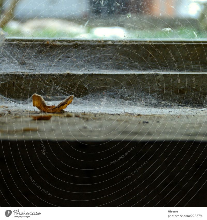 langsamer Verfall weiß Pflanze Blatt schwarz dunkel Fenster braun dreckig liegen trist Vergänglichkeit Verfall schäbig Spinnennetz Herbstlaub Fensterbrett