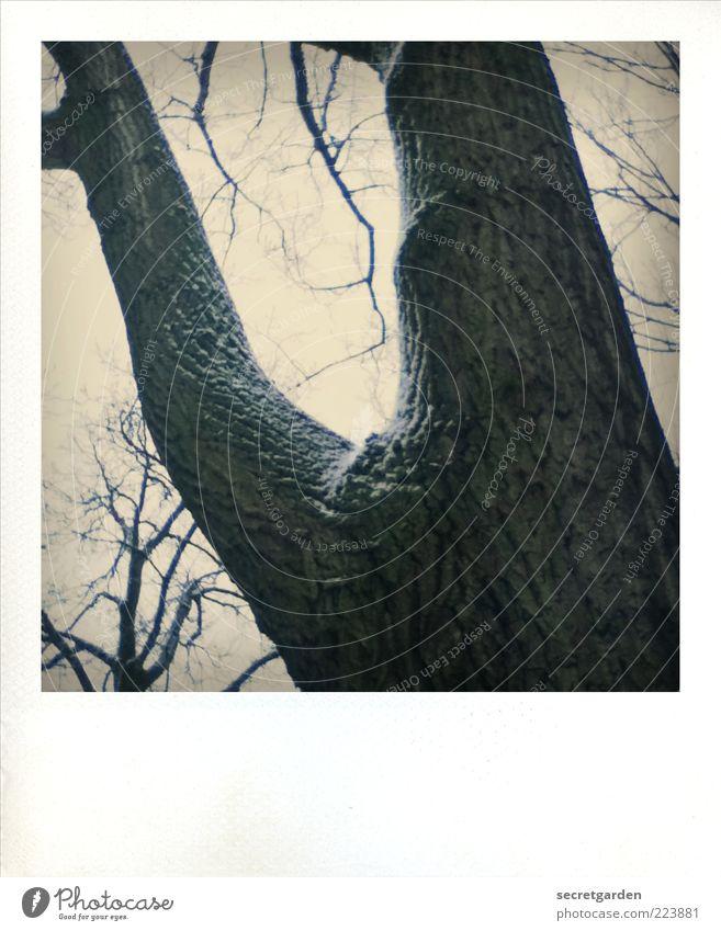 die nächste gabelung bitte links! Himmel Natur Baum Winter ruhig Schnee Holz Umwelt braun stark Entscheidung Abzweigung Polaroid
