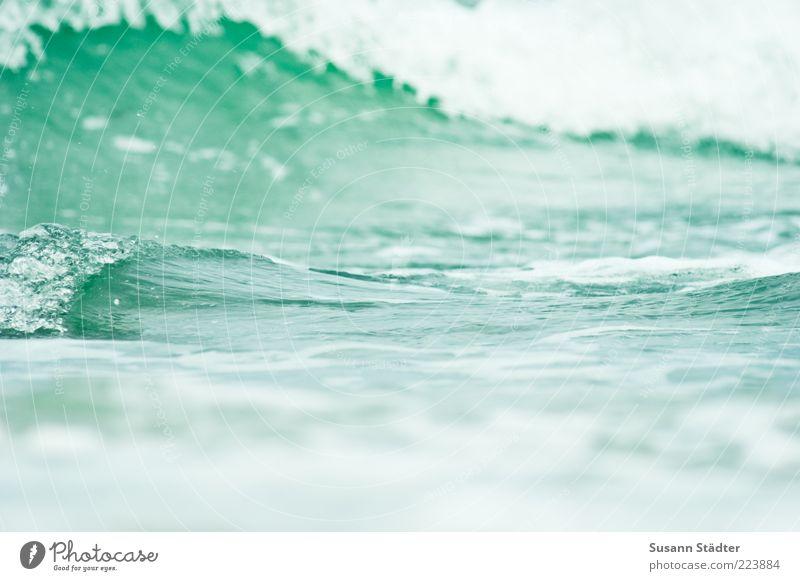 Ostsee grün Wellen Wasser Brandung Schaum Oberfläche Textfreiraum Gischt Wasseroberfläche Natur abstrakt Wellengang Tsunami
